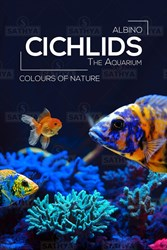 Picture of Cichlids stsgdbc13_1a320